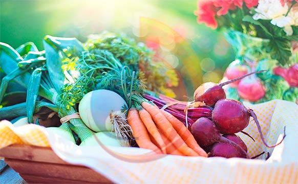 conservacion frigorifica verduras