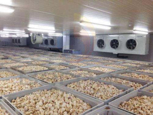 Cámaras frigoríficas para sector agroalimentario. Instalaciones con todas las garantías