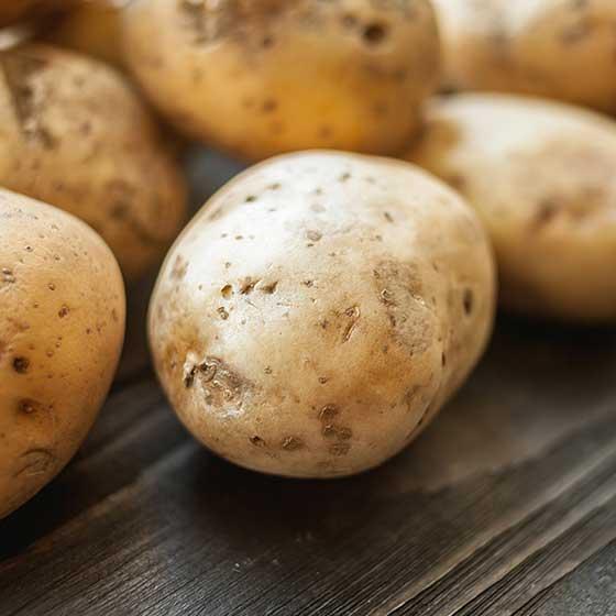 cultivo de patatas en España
