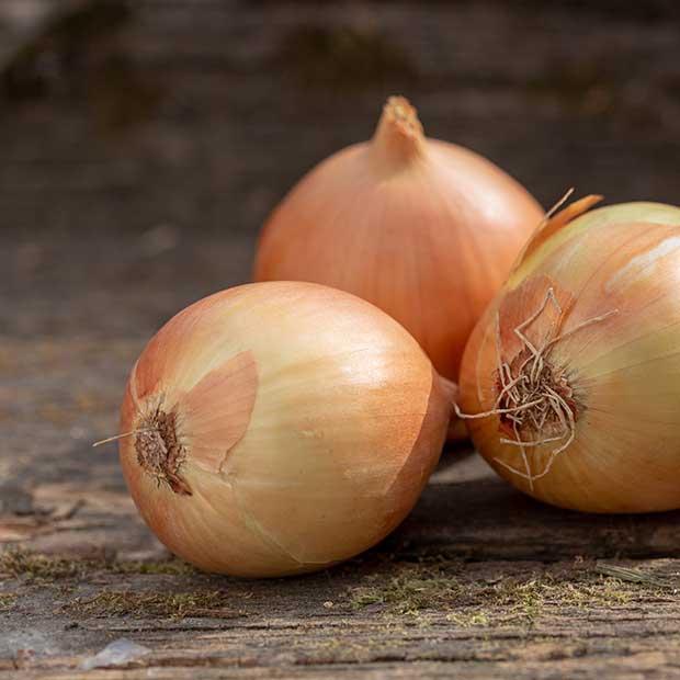 tipos de cebollas y su conservación en cámaras y cocina